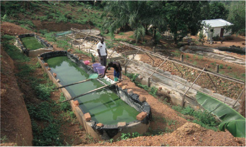 Ferme artisanale en Centrafrique