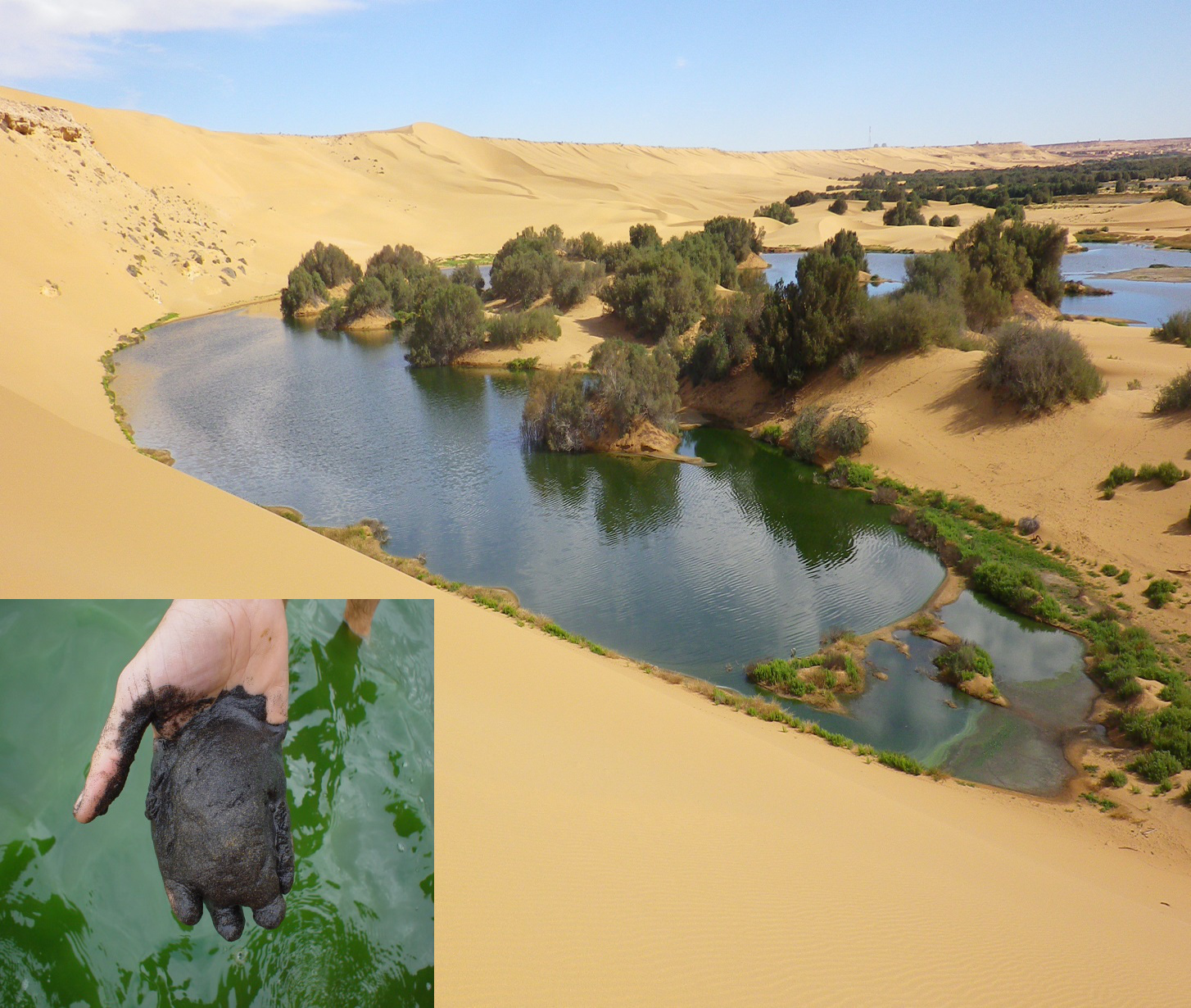 Spiruline de Laayoune et son substrat nutritif